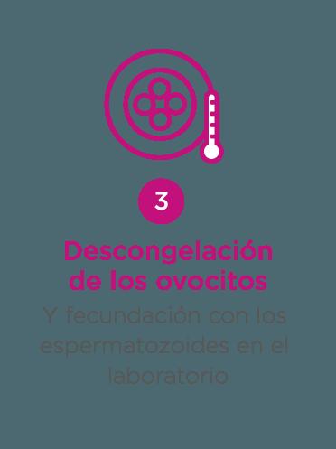 ovodonacion - paso 3: descongelación ovocitos