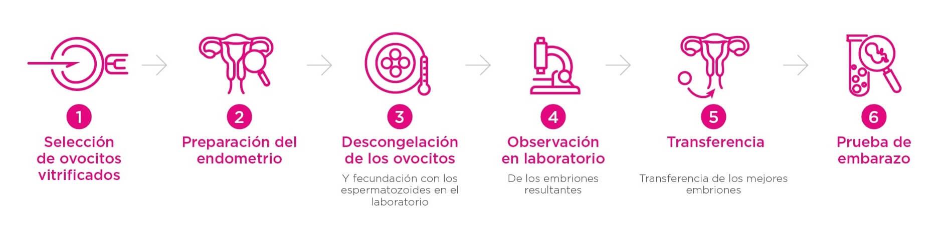 pasos tratamiento fertilidad ovodonación