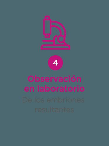 ovodonacion - paso 4: observacion en laboratorio